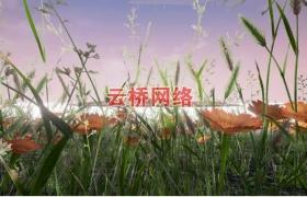 ue4商城资源Plants Pack植物包