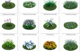 园林景观设计花草植物模型合集含材质贴图